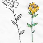 Tom's roses